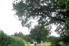 Wandelen in Montferland