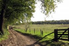 Paardrijden in Montferland