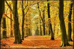 Montferlandse bossen